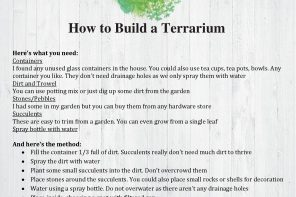 Fact Sheet – How to Build a Terrarium